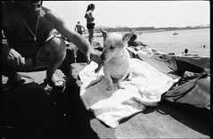 (Dog's Day at the Beach) (Robbie McIntosh) Tags: leicamp leica mp rangefinder streetphotography 35mm film pellicola analog analogue negative leicam analogico blackandwhite bw biancoenero bn monochrome argentique dyi selfdeveloped filmisnotdead autaut candid strangers leicaelmarit28mmf28iii elmarit28mmf28iii elmarit 28mm arsimagofd arsimagofddeveloper arsimagofd159 seaside rocks fujineopanacros fuji neopan acros man dog puppy laugh