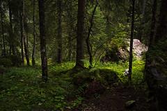Old Forest in the Gemsteltal (Netsrak) Tags: trees light shadow fern tree green nature rock stone forest licht sterreich woods rocks stones natur steine grn wald stein bume schatten baum farn felsen vorarlberg forst mittelberg at