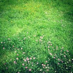springy (danamerdariu) Tags: spring