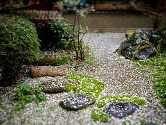 Misuyabari-ya Garden (Rekishi no Tabi) Tags: japan kyoto sakura cherryblossoms microgarden misuyabariya