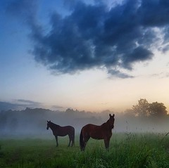 #benheinephotography #horses #nature #clouds #fog #mist #evening #chevaux #ownthetwilight #field (Ben Heine) Tags: square squareformat iphoneography instagramapp uploaded:by=instagram