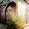 In the Weeds (Michael Mitchener) Tags: instagramapp square squareformat iphoneography uploaded:by=instagram ludwig streetmural littleindia gerrardindiabazaar backlane michaelmitchenercom