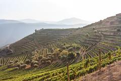 IMG_7177 (Warl0rdPT) Tags: portugal canon vineyards douro linhares 450d bragançadistrict