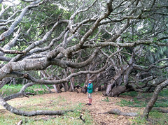 steve in the oaks (emdot) Tags: lososos centralcoast slocounty losososoaks peakaweek