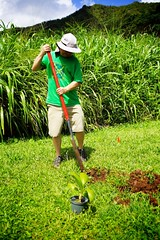 Jeff digging (LICHHappenings) Tags: photographer may shaun 18 kahana tokunaga ahupuaa 2013