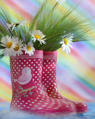 (JONE VASAITIS) Tags: flowers red summer stilllife green water rain june fun photography spring nikon shoes colours catchycolours boots fineart joy may july august explore bunch daisy april spotted dotty spatter explored