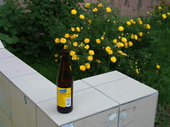 June 15, 2013 (Reasonable Excuse) Tags: flowers beer yellow