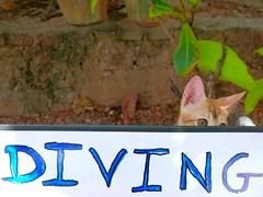"Diving Cat • <a style=""font-size:0.8em;"" href=""http://www.flickr.com/photos/92957341@N07/9163523669/"" target=""_blank"">View on Flickr</a>"