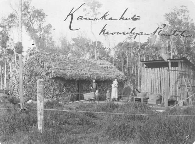 South Sea Islander huts on Mourilyan plantation, south of Innisfail, Queensland, ca. 1907