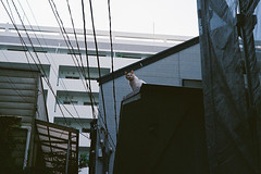 untitled (McCOCK) Tags: film japan 50mm voigtlander bessa rangefinder yokohama r3a kanagawa f25 colorskopar
