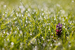 Sommarregn (Explore) (EvasSvammel) Tags: bokeh explore sommar sommarregn 365foton pioggiad´estate