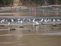 Conviviendo.... (margabel2010) Tags: espaa gente asturias aves personas animales gaviotas playas reflejos humanos