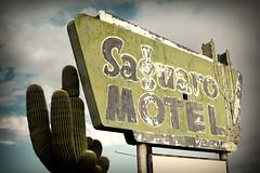 Saguaro Motel (avilon_music) Tags: cactus signs sign vintage neon motel az signage americana neonsign saguaro deserts neonsigns motelsign s100 oldsigns saguarocactus vintagesigns vintageneon vintageneonsigns route60 motelsigns americanroadside saguaromotel ghostneonsigns aguilaaz markpeacockphotography avilonmusic