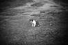 DSC_4948 (mohdhanafiah) Tags: blackandwhite bw cat dof bokeh depthoffield malaysia blacknwhite vignette bnw terengganu kucing kualaterengganu nikond40 manir mohdhanafiah nikkorafs85mmf18g