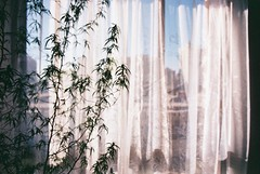 We used to have a tree (Pablo Poulain) Tags: chile camera city flowers santiago light cinema flores flower color film fleur look field analog fleurs 35mm canon vintage movie eos rebel 50mm lomo lomography fuji foto metro kodak bokeh g flor pablo young ciudad retro depthoffield iso lightleak independent 200 indie pelicula analoga mm analogue 50 cinematographer leak expired cinematic 35 lente boke expire rollo analogic poulain catridge ultramax santiagocentro rollos canonef50mmf18ii canoneosrebelg analogo anlogo filmico lomochile pablopoulain