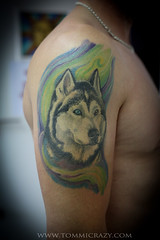 small frame 9x6 husky aurora (Tommicrazy Tattoos) Tags: uk blue dog white colour tattoo ink manchester eyes husky wolf arm smooth aurora shading middleton tomart tommicrazy tattoommi