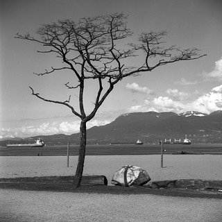 Spanish Banks - The Tree with Rock #06