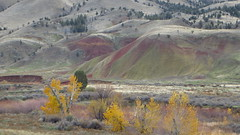 Painted Hills : touch of Fall colors in valley (gateway10027) Tags: usa fall leaves oregon leaf fallcolors or autumncolors fallfoliage foliage pacificnorthwest geology paintedhills johndayfossilbeds geologicalformation mitchellor paintedhillsstatepark ochocohighway oregonstateroute26 celebratingcolorsoffall celebratingcolorsofautumn paintedhillsstateparkor paintedhillsstateparkoregon oregonsr26