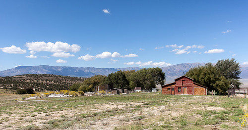Cattle Ranch _8606