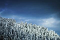 Forest (dual iso) (Laurent VALENCIA) Tags: road trees winter snow france annecy tourism fog forest french hiver route valley neige arbre col brouillard chapelle fort tourisme magiclantern laclusaz aravis hautesavoie manigod croixfry dualiso