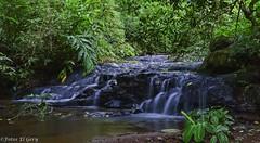 Vertiente 600Mts abajo (FotosElGery) Tags: verde green water agua crystal stones selva exhibition jungle piedras exposicin cristalina
