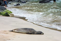 01999_RAW (Mr Inky) Tags: hawaii kauai hanalei keebeach monkseal haenastatepark sonyrx100