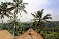 Balinese Rural Village (L. Felipe Castro) Tags: blue roof sky bali tree rural indonesia asia view rice cloudy coconut terrace top fields typical