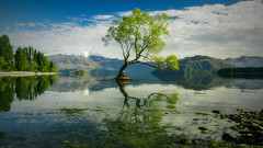 Centre Piece (Nicks.Place) Tags: blue newzealand cloud white lake reflection tree green nature water weather canon landscape photography eos photo branch photos fine southisland nicksplace 60d canon60d mygearandme mygearandmepremium mygearandmebronze mygearandmesilver mygearandmegold wwwnicksplaceconz