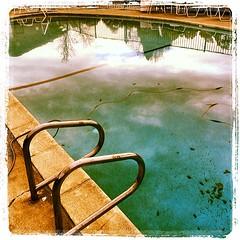 #pool #novato #lynnfriedman (Lynn Friedman) Tags: square penelope squareformat novato lordkelvin lynnfriedman 94949 iphoneography instagramapp uploaded:by=instagram