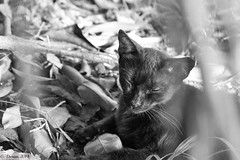 Black and White Cat (Gerard Durieux) Tags: summer blackandwhite brown sun abstract art nature beautiful animal canon garden lens landscape photography photo amazing eyes perfect pretty paradise glow puertorico awesome gray palace adventure explore sanjuan photograph strip popular 1022mm picoftheday 2014 explored canon7d