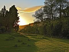 Golden Hour (Deepgreen2009) Tags: trees light sunset cloud home garden golden evening lawn