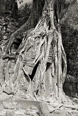 IMGP0152 (Dnl75) Tags: asia cambodia southeastasia siemreap angkor tasom