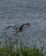 2014 may. Roermond (kuipjedebats1) Tags: animals eos blurred lowcontrast infocus reeuwijk the netherlands canon mediumquality jc 1100d efs55250mmf456isstm kuipjedebats kuipers