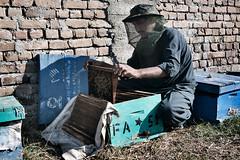 Un apicultore al lavoro