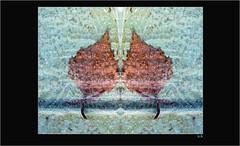 Blatt im Eis (Weinstckle) Tags: blatt eis spiegelung winger birkenblatt