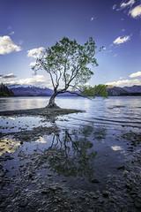 That Wanaka tree again (John A Hunt Photography) Tags: newzealand otago wanaka nikond600 visitnewzealand sthislandnewzealand 1635mmf4 wanakatree