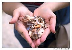 Mani (Gaetano Camiciotto) Tags: shells closeup hands mani primopiano canonitalia fotoamatorigioiesi