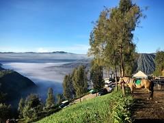 Walk after sunrise (s_desilva) Tags: horse sunrise indonesia walk viewpoint surabaya mountbromo