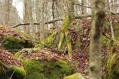 Catamount Trail - 5/5/16 (myvreni) Tags: nature spring vermont