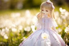 (koroa) Tags: flowers blue light summer white doll may v fairy bjd bf msd tf bluefairy tinyfairy feeriedoll feeriedollatelier