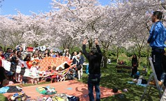 Pose for group foto (Ramon Boersbroek) Tags: park pink trees shadow holland netherlands beautiful dutch up amsterdam japan cheese garden children cherry japanese hands stair foto blossom north group flags ready whit setting bos say complete blossem amstelveensebos