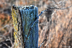 Frosty Fencepost_160223 (rjmonner) Tags: wood brown white broken field rural fence wire rust midwest frost post farm country farming rustic neglected iowa barbedwire weathered agriculture decayed agricultural jackfrost battered weatherworn agronomy woodpost agronomic