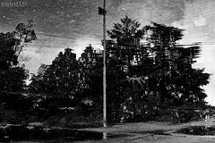 Ghostly woods (Kindallas) Tags: water wood tree reflex black white usp brazil wave pool rain outdoor ghostly surreal surrealistc gothic