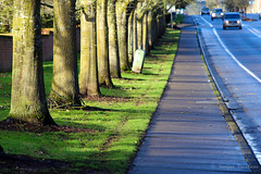Ordinary place extra ordinary light (EighteenPercentGray) Tags: road street blue tree green oregon canon portland eos t3i 600d canonef70200mmf40lusm 70d