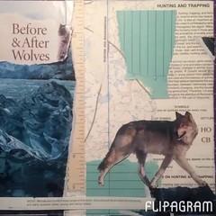 Wolf Collage (ArcticCoyote) Tags: art paper notebook books sketchbook bookbinding binding handmadebooks