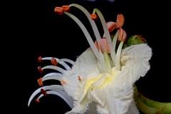 Flower (heiko.moser) Tags: flowers plant flower color macro nature floral closeup flora pflanze natura 100mm blume makro blte nahaufnahme blh heikomoser