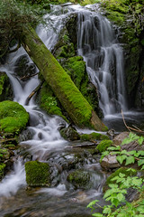 DSC09463.jpg (jjdun7) Tags: travel nature water oregon creek forest river landscape countryside waterfall stream lifestyle environment landforms 2016 2015 sardinecreek
