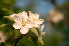 Spring Campus Flowers-21