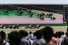 viewing options (ken_tsuda) Tags: horse green grass japan race tokyo nikon nikkor 70200 f28 kota kentsuda 20160605hhourseracing8847