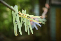 Clothespins (indiglogust) Tags: spring nikon dof bokeh cottage clothespins d5200